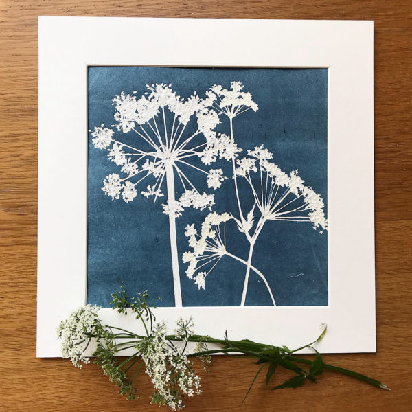 Botanical Impression Cow Parsley Monoprint