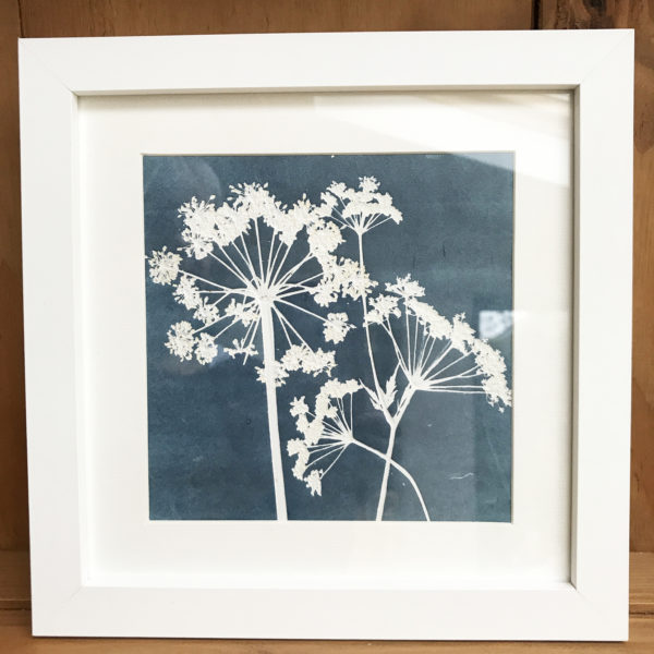 cowparsley monoprint frame
