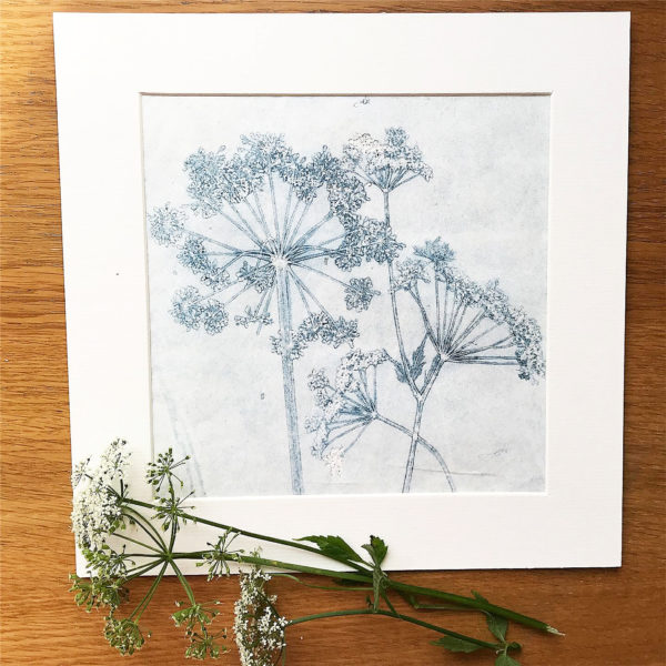 monoprint ghost cow parsley